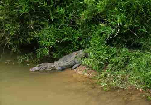 安徽扬子鳄国家级自然保护区