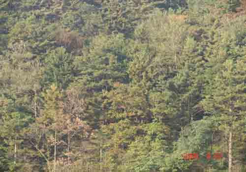 河南小秦岭国家级自然保护区