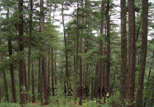 丰林自然保护区的地带景观属温带针阔混交林带