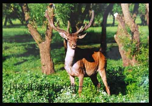 国家林业局自然保护区研究中心