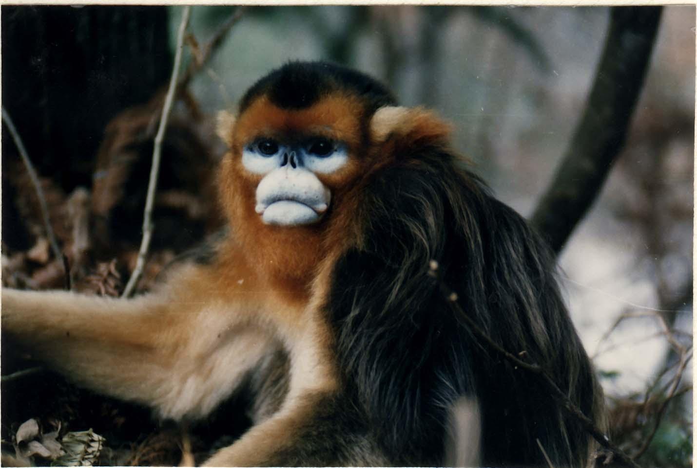 金丝猴,扭角羚等国家重点保护野生动物及其栖息地